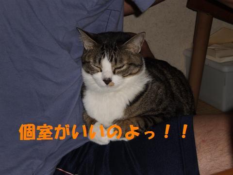 007_convert_20090517182903.jpg