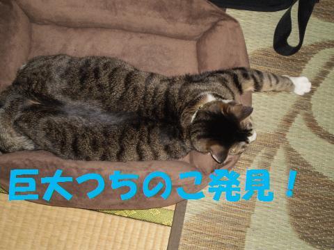 008_convert_20090502174409.jpg