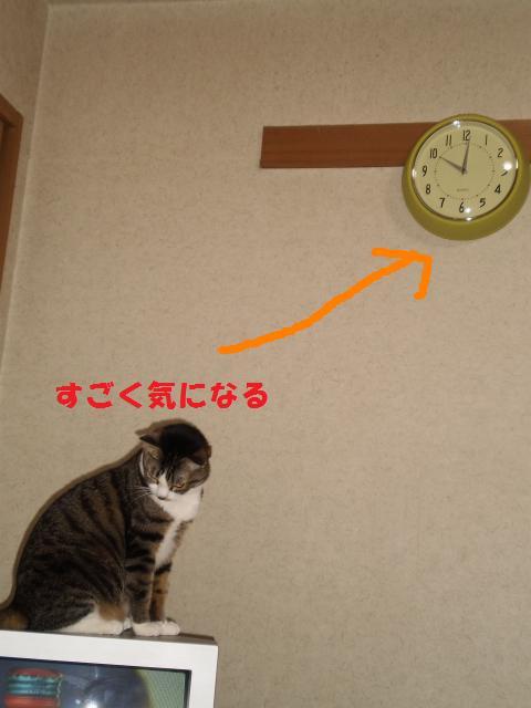 008_convert_20090514175107.jpg