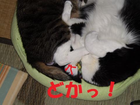 008_convert_20090705225024.jpg