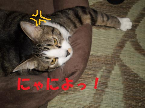 009_convert_20090502174509.jpg