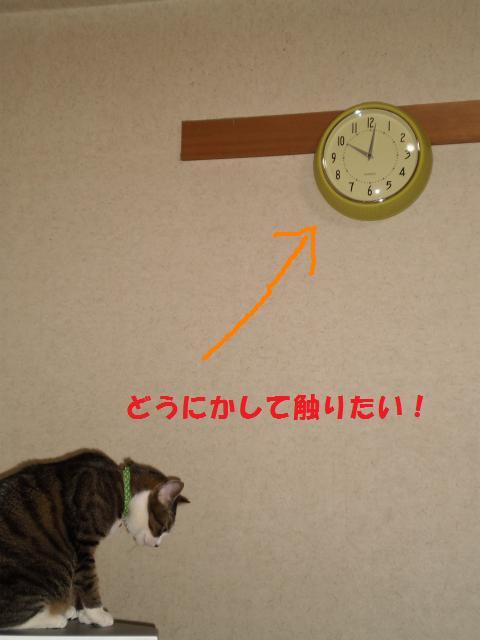 009_convert_20090514175220.jpg