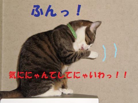 010_convert_20090514175340.jpg