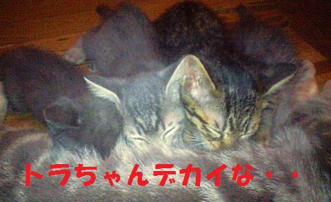 neko4_convert_20090724225733.jpg