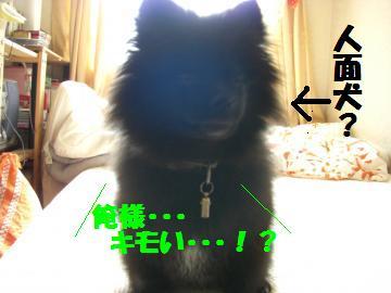008_convert_20080802193325.jpg