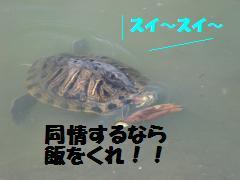 0730-08_convert_20080801082309.jpg