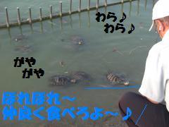 0730-09_convert_20080801082426.jpg