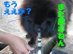 0730-19_convert_20080801083245.jpg