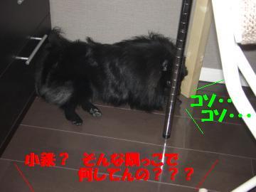 0802-04_convert_20080802193836.jpg