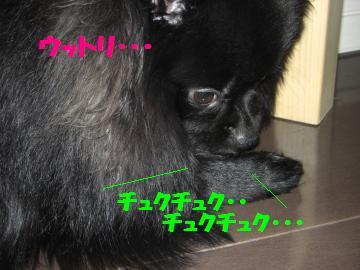 0802-05_convert_20080802194013.jpg