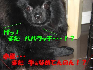 0802-06_convert_20080802194129.jpg