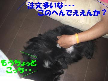 0803-04_convert_20080803213943.jpg