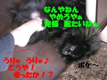 0804-01_convert_20080805080420.jpg
