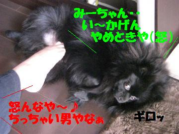 0804-03_convert_20080805080558.jpg