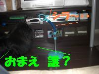 0805-03_convert_20080806143623.jpg