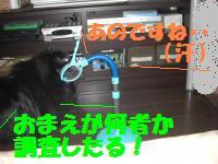 0805-08_convert_20080806144121.jpg