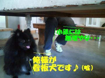 0811-6_convert_20080812000243.jpg