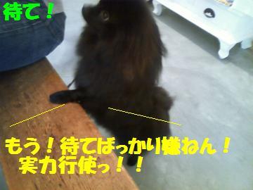 0811-7_convert_20080812000323.jpg