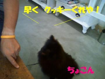 0811-8_convert_20080812000403.jpg