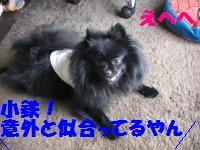 0813-49_convert_20080813220855.jpg