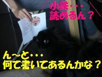 0813-64_convert_20080813222015.jpg