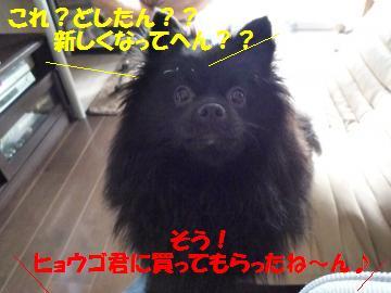 0815-4_convert_20080816130643.jpg