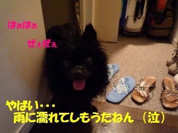 0816-9_convert_20080818010431.jpg