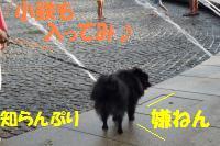 0817-46_convert_20080818160530.jpg