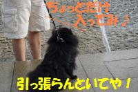 0817-47_convert_20080818160734.jpg