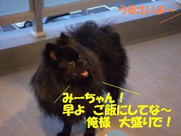 0817-57_convert_20080818161813.jpg