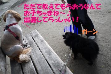 0820-1_convert_20080822193555.jpg