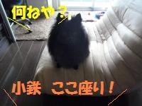 0822-2_convert_20080822194519.jpg