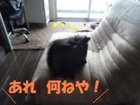 0822-3_convert_20080822194557.jpg