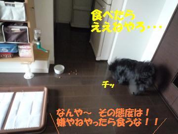 0822-4_convert_20080822194637.jpg