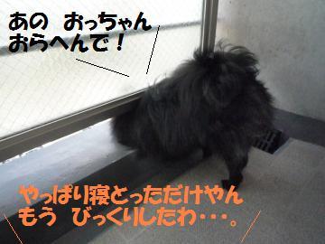 0822-7_convert_20080822194844.jpg