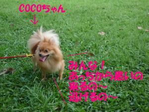 0824-4_convert_20080825000415.jpg