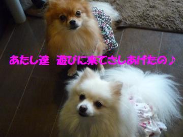 0903-02_convert_20080904153647.jpg