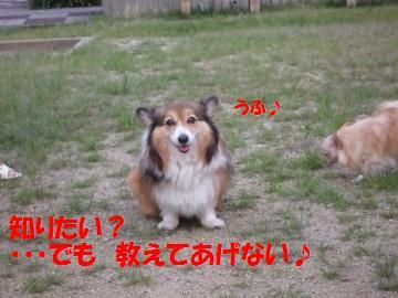 0904-4_convert_20080906090520.jpg