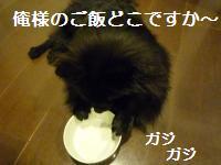 0908-13_convert_20080910005107.jpg