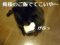 0908-19_convert_20080910005342.jpg