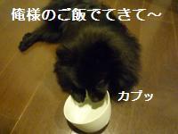 0908-21_convert_20080910005447.jpg