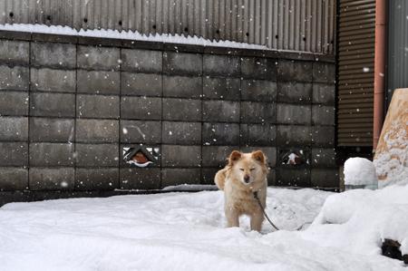 雪の中2012