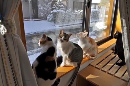 雪の日の窓辺
