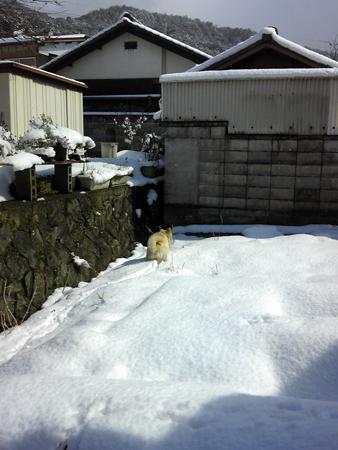 雪の裏庭1