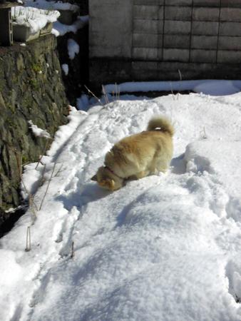 雪の裏庭2