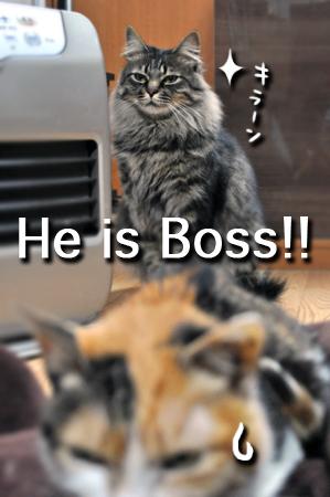 ボスです2