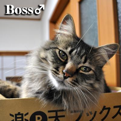 ボス2012.2.28