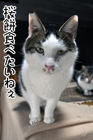 桜餅食べたい