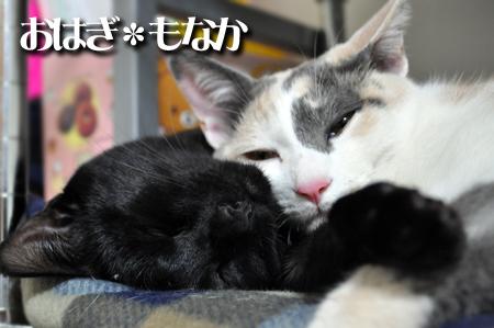 おはぎもなか2012.3.21