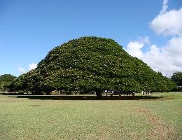 この木なんの木♪
